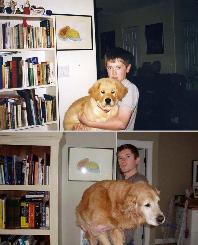 awebic-animais-antes-depois-22