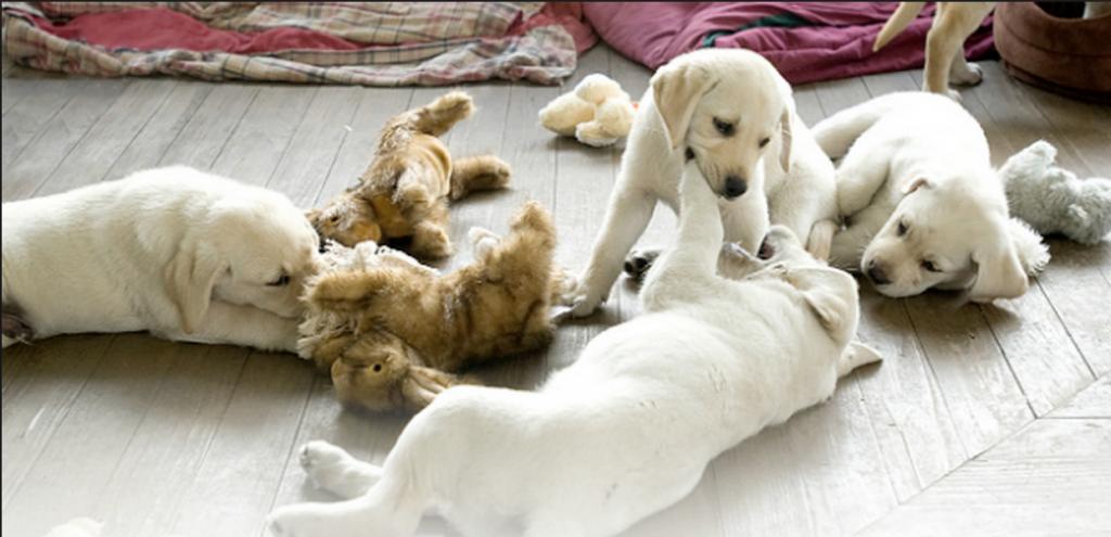 bebê cão