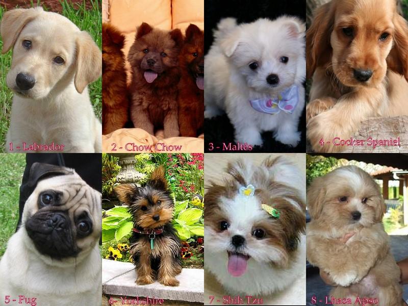 cães raças