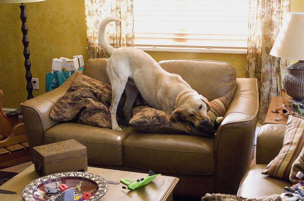 marley no sofá