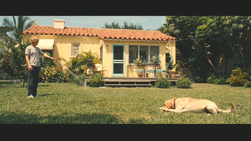cão no terreiro