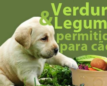 cachorros podem comer