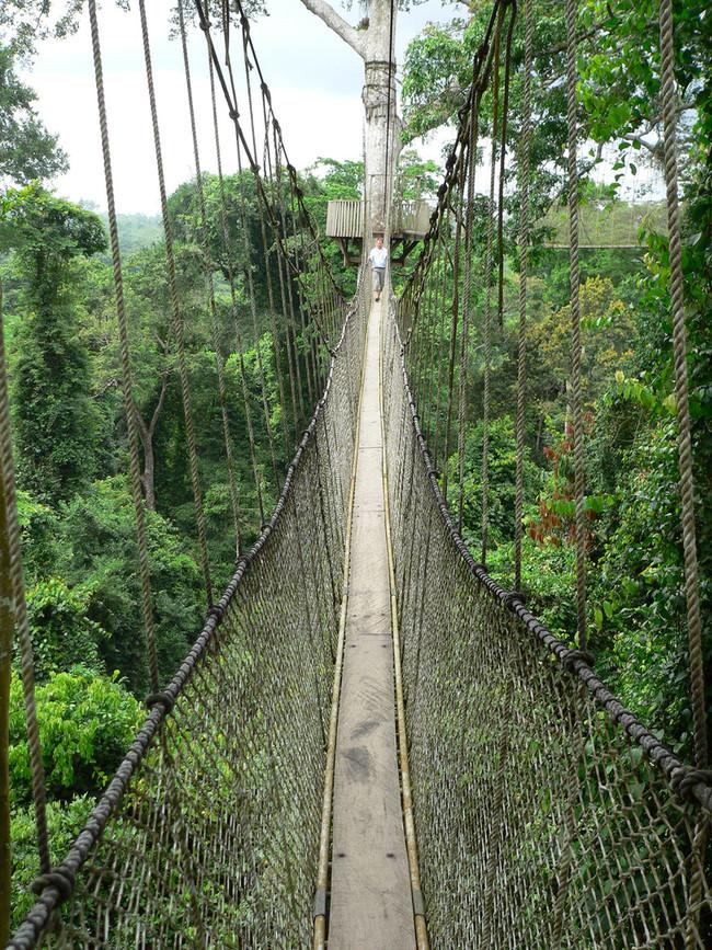 Ponte entre árvores