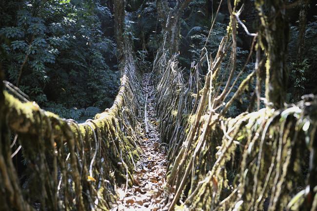 ponte no meio da selva