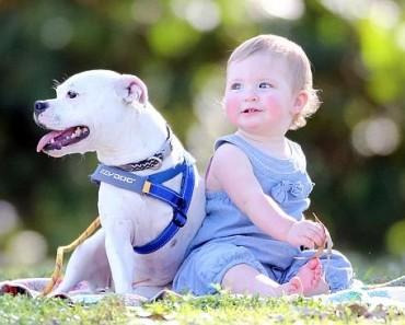 bebê e cachorro