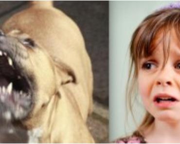 cachorro e menina