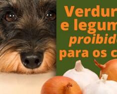 alimentos-proibidos-caes-saude-alimentacao